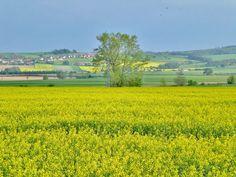 Fields, Opava Kylesovice