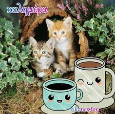 Πανέμορφα γατάκια σας λένε όμορφες καλημέρες! - eikones top Lunch Box, Mugs, Tumblers, Bento Box, Mug, Cups