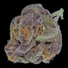 Purple Dream | Hybrid of Purple Diesel and Blue Dream, sweet and hazy nose, tastes slightly metallic, mellow high that is relaxing and cerebral. THC averages at 25%