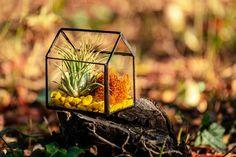 Terariu cu plante, din sticlă, căsuță geometrică - Greenarium Bird Feeders, Terrarium, Outdoor Decor, Vintage, Home Decor, Plant, Geometry, Terrariums, Decoration Home