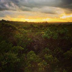 #portcampbell #portcampbellnationalpark #loch #lochardgorge #lochard #gorge #twelveapostles #greatoceanroad #australia #melbourne #visitvictoria #sky #nature #greenary #flora #vegetation #bush #sunset #clouds #shipwreckcoast #shipwreckcove by raqibc