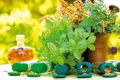 Využitie viacerých druhov byliniek-ktorá bylinka na čo je dobrá.