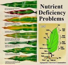 ~What Leaf Says About Nutrient Deficiency Problem~