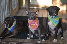 The 3 Amigos waiting to go beaching. Photo by Maureen Cranfill