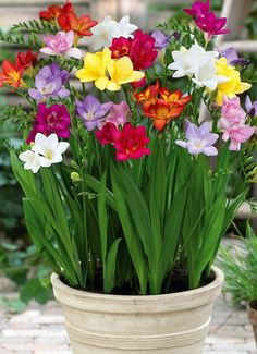 Freesias - I love these flowers, and they smell SOO good- like honey