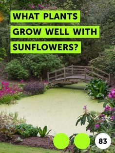 Learn How Much Sun Do Strawberry Plants Need? Plant Needs, Plants, Planting Flowers, Growing Flowers, Strawberry Plants, Growing Roses, Orchids, Growing Sunflowers, Tall Flowers