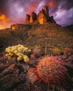 Arizona - Peter Coskun