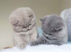 These cute kittens will bring you joy. Cats are wonderful creatures. Cute Baby Cats, Baby Kittens, Cute Cats And Kittens, Cute Baby Animals, I Love Cats, Crazy Cats, Kittens Cutest, Animals And Pets, Funny Animals