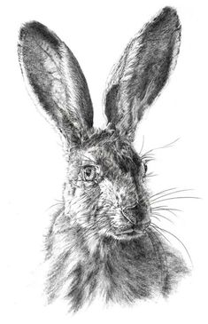 Artist: Vivienne Coleman - Title: Hare - Materials/Techniques used: Pencil - Inspires, why? The simplicity of the drawing and its plain background allows the observer to focus closely on the detail of the drawing itself Animal Paintings, Animal Drawings, Pencil Drawings, Art Drawings, Drawing Artist, Drawing Sketches, Painting & Drawing, Artwork Online, Sell Artwork