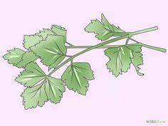Como Cultivar Salsinha