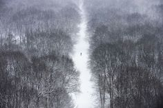 (MARKUS SCHREIBER / AP) - A man walks through the Tiergarten park after fresh snow falls hit Berlin, Germany, Tuesday, March Unfriendly winter weather continues in northern and eastern Germany on the last day of winter. Mini Pigs, Battle Of Britain, World Pictures, World War Ii, Planets, Cool Photos, Around The Worlds, In This Moment, Make It Yourself
