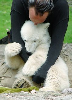 Sometimes you just need a big hug. Knut, the Polar Bear cub certainly did! Click through to see this week's Winsome Wednesdays featuring adorable animals sharing some big hugs!