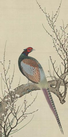 Pheasant on a plum tree. Main detail of a hanging scroll; ink and color on silk, early century, Japan by artist Takakura Zaiko. Japanese Bird, Traditional Japanese Art, Galo, China Painting, Chinese Art, Chinese Brush, Japanese Painting, Japan Art, Japanese Artists