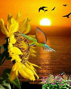 Peace and grace 🌻 Rob and Bob Sunflower Quotes, Sunflower Pictures, Sunflower Art, Sunflower Fields, Yellow Sunflower, Yellow Flowers, Sun Flowers, Sunflowers And Daisies, Sunflower Wallpaper