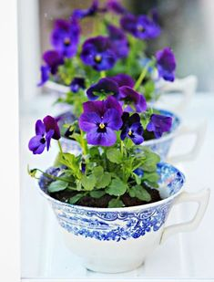 AFRICAN VIOLET: Pick a bright spot--say, a kitchen window--for this vibrant plant and keep it in a squat pot or a medium-sized teacup to accommodate the shallow roots. Careful not to overwhelm them with water (only when the soil is bone dry!) and try not to get the leaves wet.