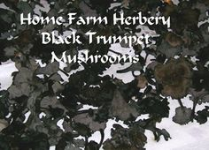 Black Trumpet Mushroom Dried,  Buy 1 or Buy 3 & Get 1 FREE, Order now, NO Chemicals, FREE shipping,