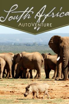 Looking for that trip of a lifetime? AutoVenture's three-day safari at Gorah Elephant Camp in South Africa should top your list. Exclusive, luxury accommodations in the heart of the famous Addo Elephant National Park.