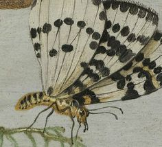 jan van kessel: insects and fruits (detail), c.1665