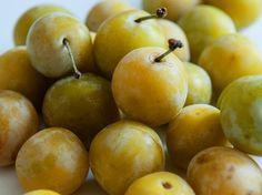 kriecherl - Google-Suche Pear, Fruit, Google, Food, Schnapps, Search, Meal, The Fruit, Essen
