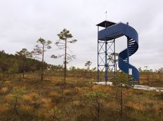 Moorschuhwanderung im Soomaa-Nationalpark, Estland