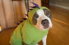 DIY dog Dino hoodies