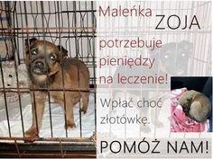 Kochani, pilnie potrzebujemy Waszej... - Schronisko dla Zwierząt - Tomaszów Mazowiecki - Wolontariat   Facebook