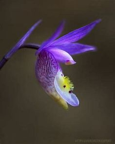 Image result for slipper orchid images