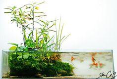 This aquarium is so reminiscent of traditional ikebana (Jap. Planted Aquarium, Aquarium Terrarium, Aquarium Fish Tank, Nature Aquarium, String Garden, Aquatic Ecosystem, Aquatic Plants, Indoor Water Garden, Indoor Plants