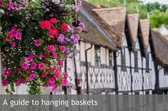 Hanging Basket Step-by-Step Video Tutorial - Tara Brunsen Winter Hanging Baskets, Plants For Hanging Baskets, Hanging Pots, Insulated Garden Room, Shed Sizes, Trailing Flowers, Small Shrubs, Small Outdoor Spaces, Water Features In The Garden
