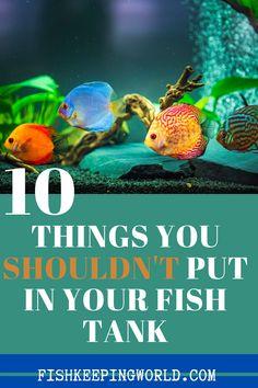 10 Things You Shouldn't Put In Your Fish Tank - Fishkeeping World Aquarium Set, Betta Aquarium, Tropical Fish Aquarium, Tropical Fish Tanks, Aquarium Design, Tropical Freshwater Fish, Freshwater Aquarium, Betta Fish Tank Mates, Biotope Aquarium
