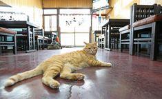 そば屋「やぶ」の休憩時間、無人の店内でくつろぐ看板猫のピンク=荒川区町屋(尾崎修二撮影)