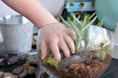 kid project: make a succulent terranium