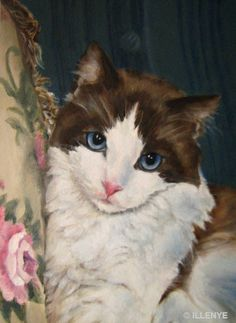 Osa gato personalizados retratos de mascotas de cualquier tamaño - JEANNE ILLENYE