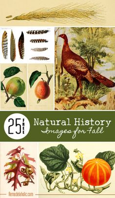 25 Free Vintage Nature Images for Fall