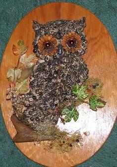 Seed owl