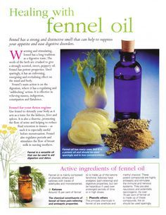 Herbs: Healing with Fennel Oil. Healing Oils, Healing Herbs, Aromatherapy Oils, Medicinal Herbs, Natural Healing, Natural Oils, Fennel Essential Oil, Essential Oil Uses, Young Living Essential Oils