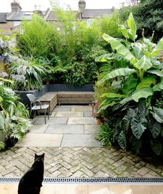 Gorgeous Small Gardens Design Ideas with Cozy Seating is part of Tropical patio - Seating space is a great instance of doubleduty design Whether you are searching for a garden makeover, stunning distinctive garden design Urban Garden Design, Tropical Garden Design, Backyard Garden Design, Small Backyard Landscaping, Small Garden Design, Small City Garden, Landscaping Ideas, Terrace Garden, Small Garden Planting Ideas