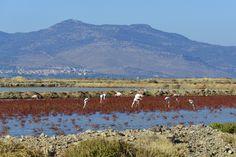 Flamingos - Skala Polichnitou, Lesvos | by Malc ©