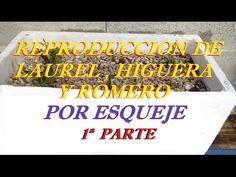 Como Reproducir Plantas De Laurel,Higuera y Romero Por Esqueje. (1ª PART...