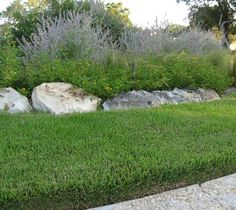 Zoysia Grass - Highly Drought Resistant This is what kind of grass I want in my yard.