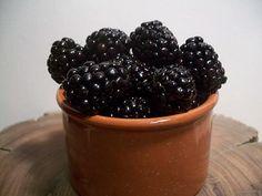Organic Berry Plants