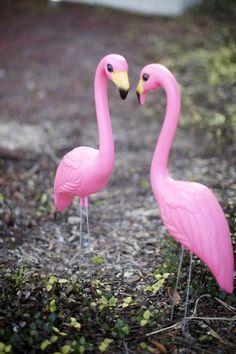 i love flamingo