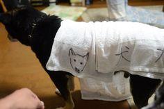 """ももさんのツイート: """"#タイムラインを雨の日のワンコで埋め尽くそう 雨の日は手製の犬タオルで濡れた犬を拭く https://t.co/LtvCs5zaSz"""""""