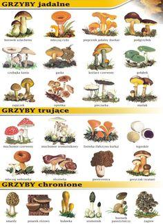 Mushroom Species, Interactive Notebooks, Nature Animals, Botanical Illustration, Learn English, Teaching Kids, Paper Dolls, Montessori, Flora