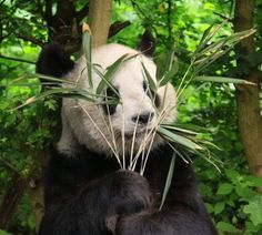 cute animals hq 33 Daily Awww: These animals get gold stars in CUTE (35 photos)