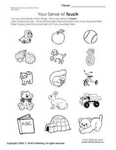 math worksheet : 5 senses words worksheet  recipes to cook  pinterest  : 5 Senses Kindergarten Worksheets