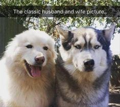 23 Funny Animal Pictures - Funny Animals - Daily LOL Pics Dogs say or think the darndest things. Here are some possible thoughts your dog may have. Funny Animal Memes, Funny Animal Pictures, Cute Funny Animals, Funny Cute, Dog Pictures, Funny Dogs, Animal Pics, Funny Puppies, Funny Husky