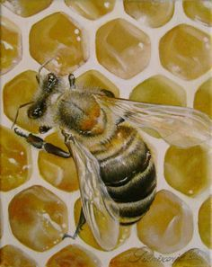 Honey Bee 2, Bee Rocks, Bee Images, I Love Bees, Bees And Wasps, Bee Jewelry, Bee Art, Bee Happy, Bees Knees