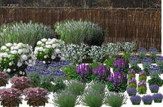 Kasia - fiolet2   MikaMicz Outdoor Gardens, Yard, Garden Design, Garden, Outdoor, Plants