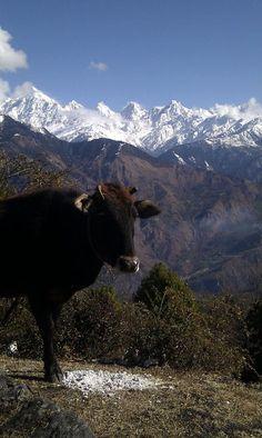 The Himalayas as seen from Munsiyari, Uttarkhand, India